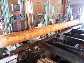 スギ、天竜スギ、天竜杉、丸志、丸志木材、林業、製材、丸太
